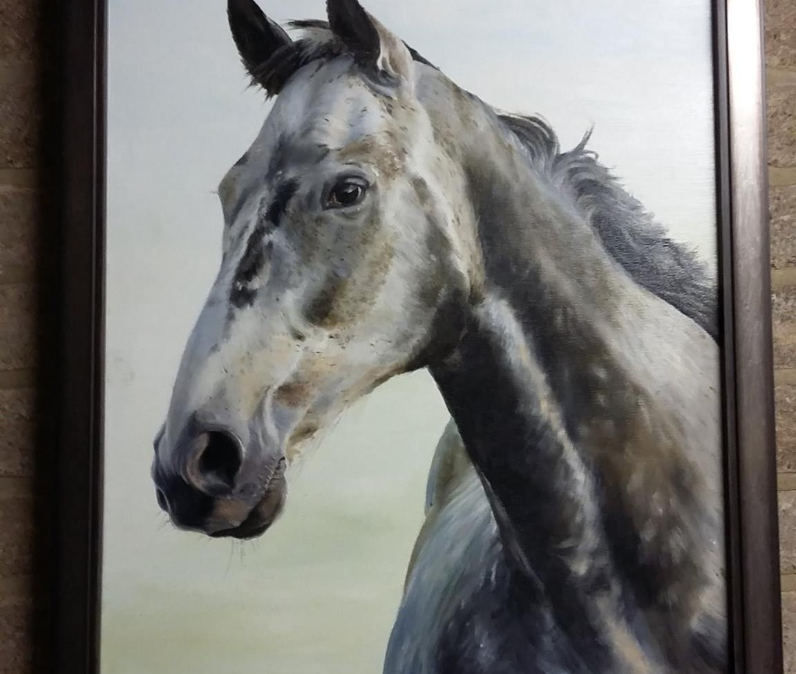David Fieldhouse - Grey Gelding - Farrell\'s Framings framing and ...